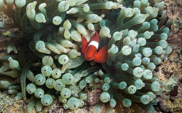 Zdá se, že Nemo už se našel.
