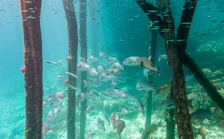 Tolik ryb, tolika druhů jsem při šnorchlování ještě neviděla.