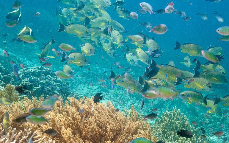 Nejkrásnější útesy s největší biodiverzitou jaké jsme kdy viděli.