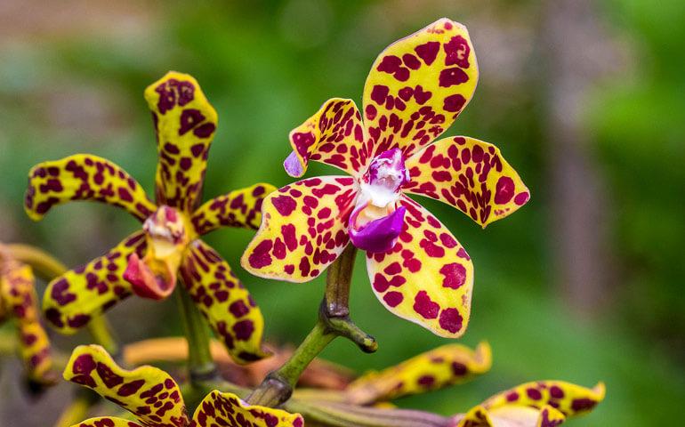 Orchidejím se tu náramně daří.