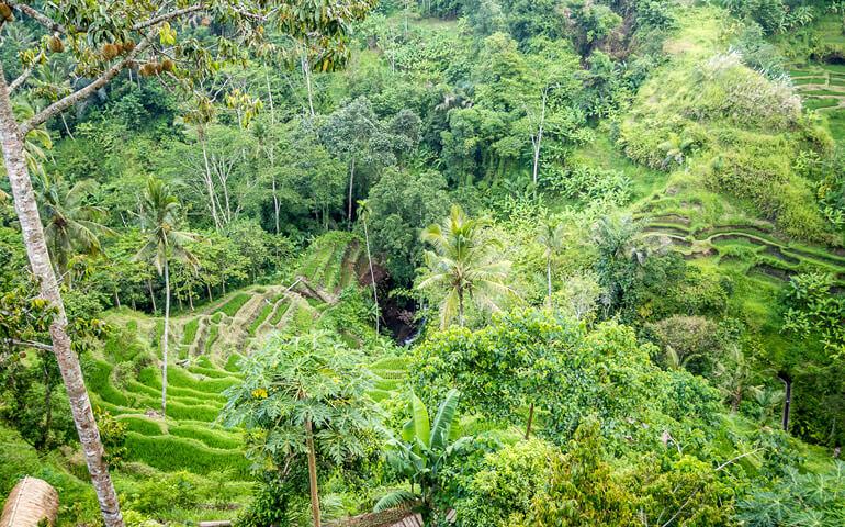 Ubud - záplava zeleně. Jeho okolí je namodelováno do neuvěřitelných forem. Krajina je zvrásněna divokými dešti vyrývajících hluboká údolí do měkkého podloží.